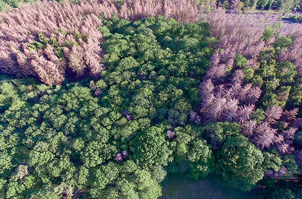 Beitrag im Bild Wald
